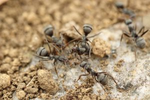 Banish Pest Control - Pest Control Beaverton, Oregon - Ants, Mice, Spiders, Termites, Rodents, Bees, and Wasps